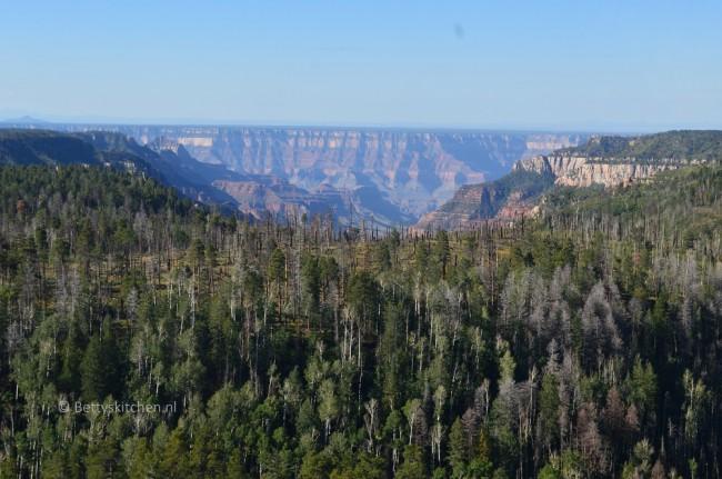 grand_canyon_treeline-001