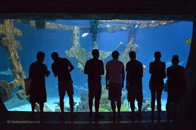 las_vegas_shark_reef_mandalay_bay